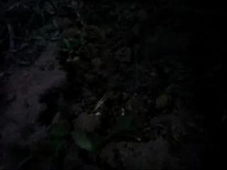 homem deita sentando de bunda no formigueiro