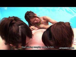 Muitas bichas asiáticas que sugam gatos na piscina