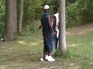 Partido preto do sexo na madeira