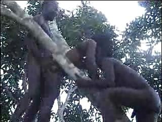Fuck amador africano real na parte 2 da árvore