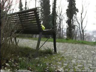 Masturbação cairns em parque público