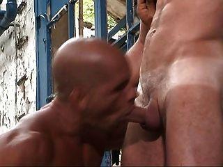 Gays homens com músculo