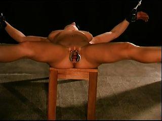 Tortura de bichano