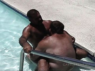 Ursos na piscina
