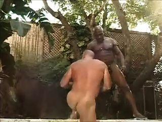 Urso de músculo fodido por dick preto grande