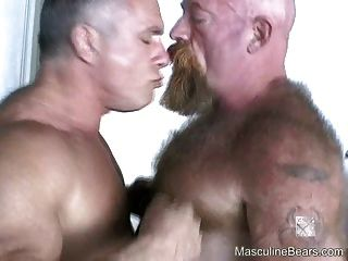 Os ursos peludos grandes apreciam a foda áspera