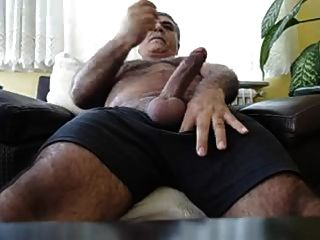 Urso turco