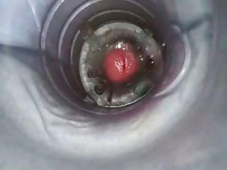Bichano de plástico foda