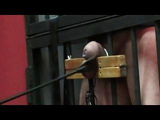 Tortura séria do galo e da esfera