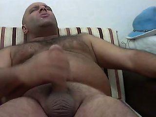 Turco, urso, grande, galo