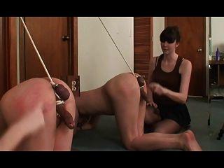 Tortura de galo
