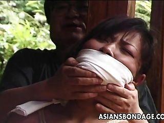amarrou o puma asiático maduro para uma viga doméstica
