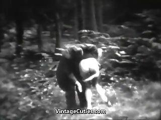 A cadela impressionante se diverte na floresta (vindima dos anos 30)
